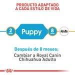 RC-BHN-Chihuahua-_Puppy-CM-EretailKit-3_Med._Res.___Basic